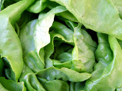 vegetables-lettuce.jpg